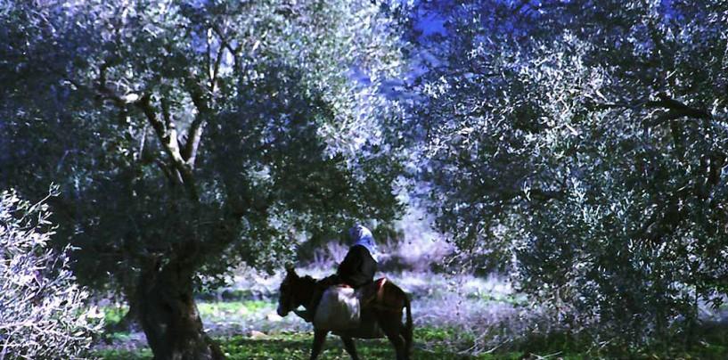 Верхняя Галилея: вино, природа и мистика
