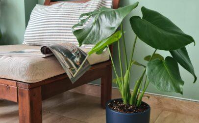 10 растений, которые наверняка приживутся в ваших квартирах